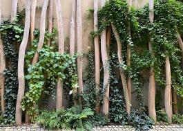 Bäume_9903